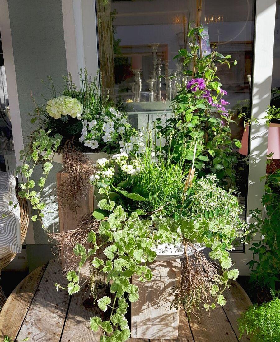 Dekorierte Grünpflanzen im Außenbereich von Blumen Tinneberg Ramstein